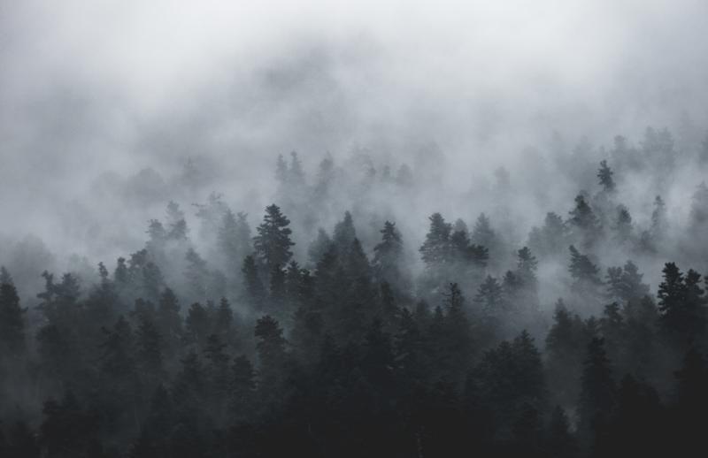 fenomeno-natural-niebla