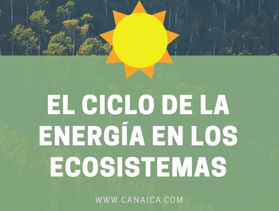el-flujo-de-energia-en-los-ecosistemas